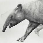 Tapir 2012