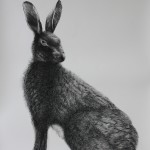 Hare (In memory of Marcus) charcoal, pencil and graphite on Arches paper 76 x 56 cm