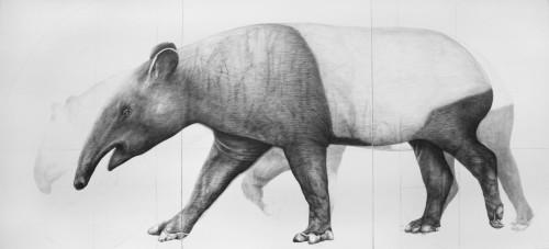 strampp_adriane_tapir