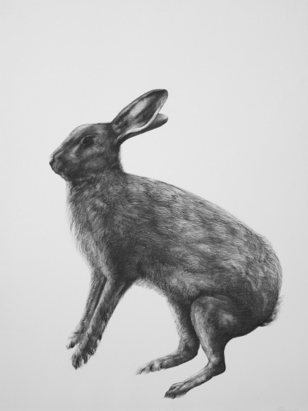 Adriane Strampp Drawing, Encounter II, 2010, Charcoal On Paper, 76 X 56 Cm