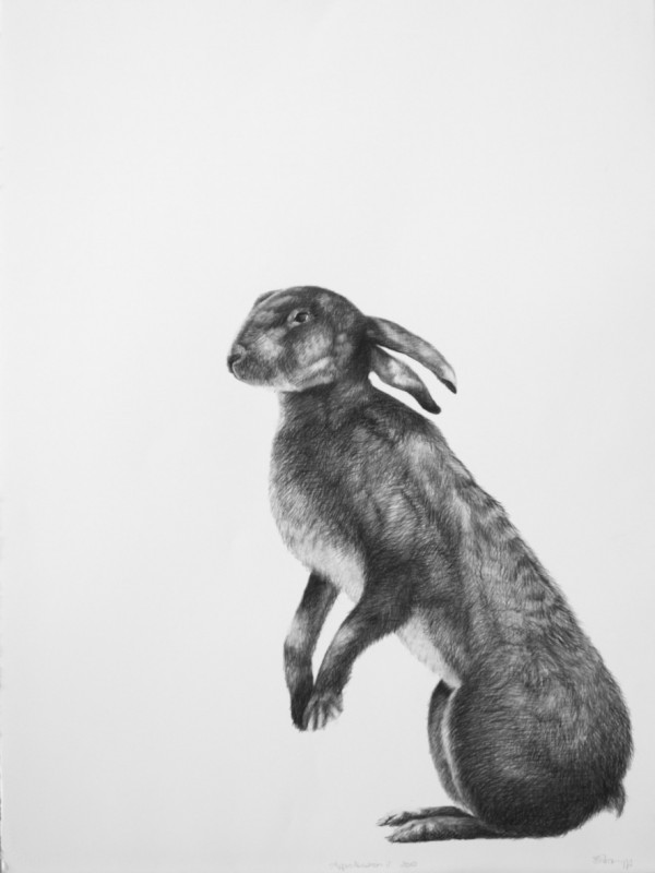 Adriane Strampp Drawing, Apprehension II, 2010, Charcoal On Paper, 76 X 56 Cm