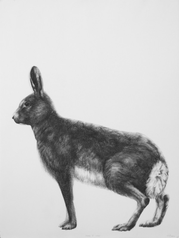 Adriane Strampp Drawing, Hare IV, 2010, Charcoal On Paper, 76 X 56 Cm